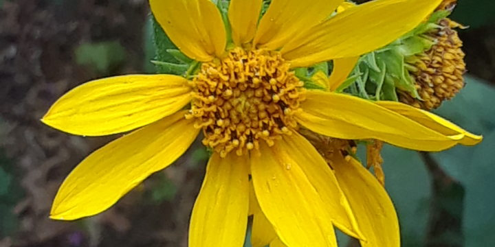 End of July – Name that Flower